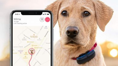 Photo of Discover 8 New Technologies For Your Dog