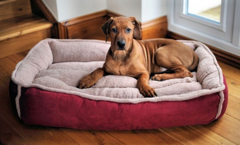 Photo of Dog Bed – How To Choose A Perfect Bed For Your Dog?